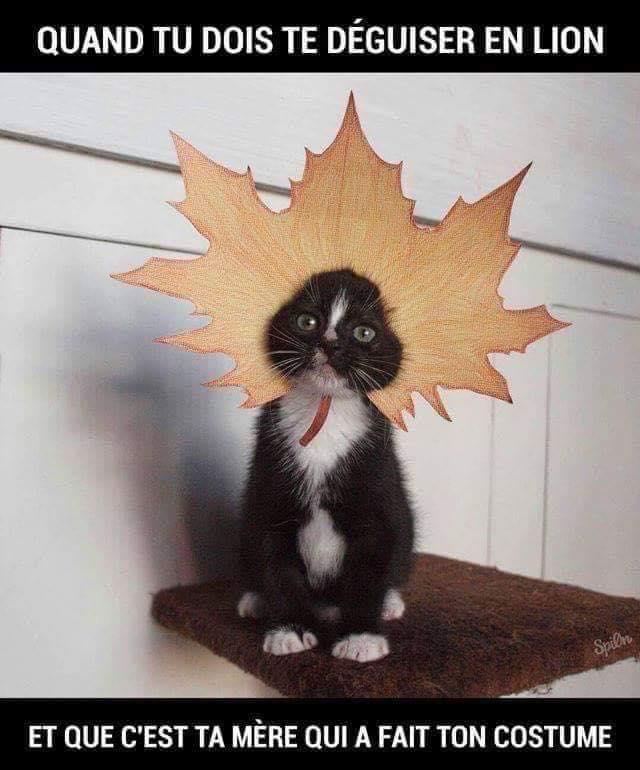 Photos Humour : Quand tu dois te déguiser en lion