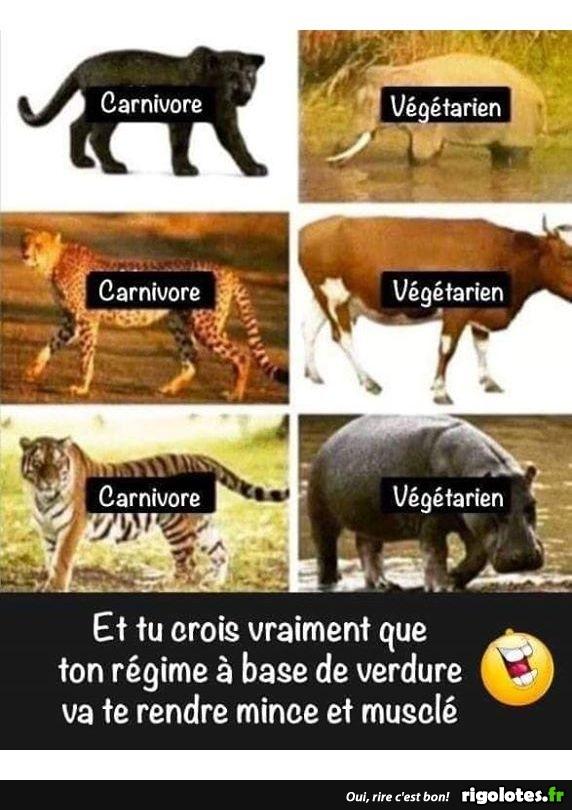 "Photos Humour : régime ""vert"""