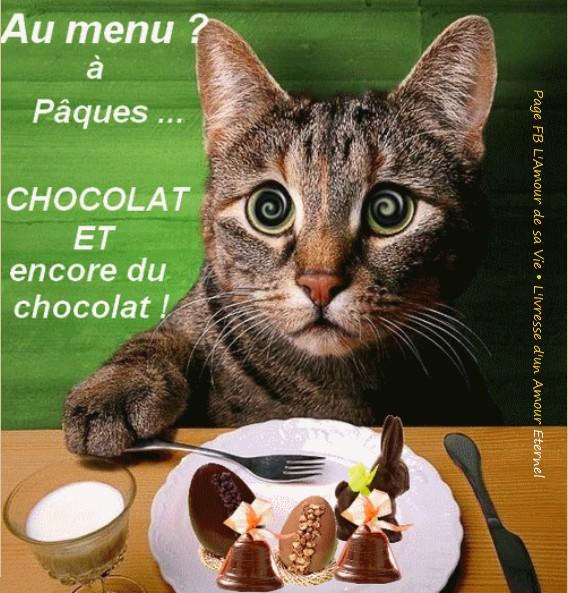 Photos Humour : Au menu à Pâques  ... Chocolat et encore du choc