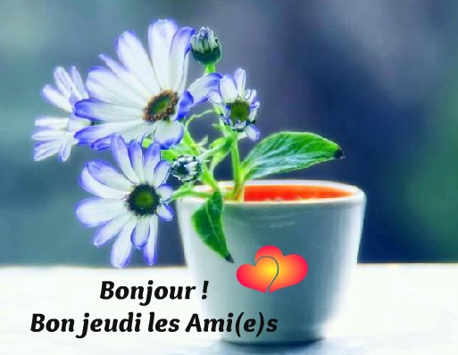 Photos Humour : Bonjour ! Bon jeudi les Ami(e)s