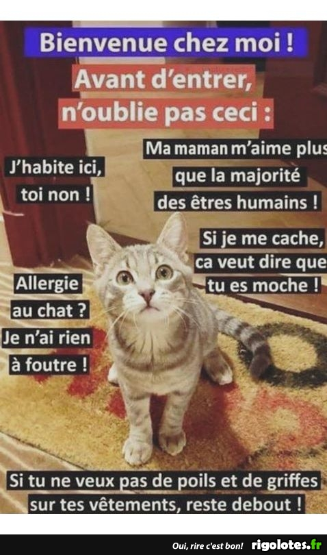 Photos Humour : les commandements du chat