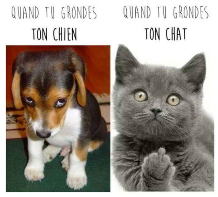Photos Humour : quand on les gronde
