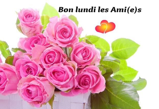 Photos Humour : Bon lundi les Ami(e)s