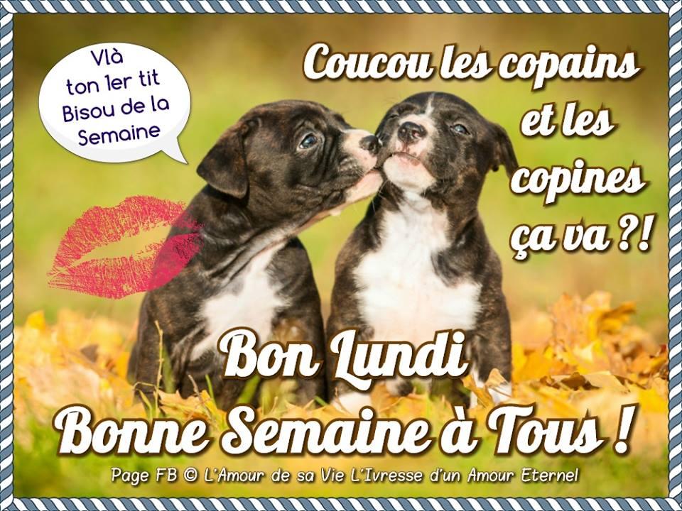 Photos Humour : Bon Lundi, Bonne Semaine à Tous !
