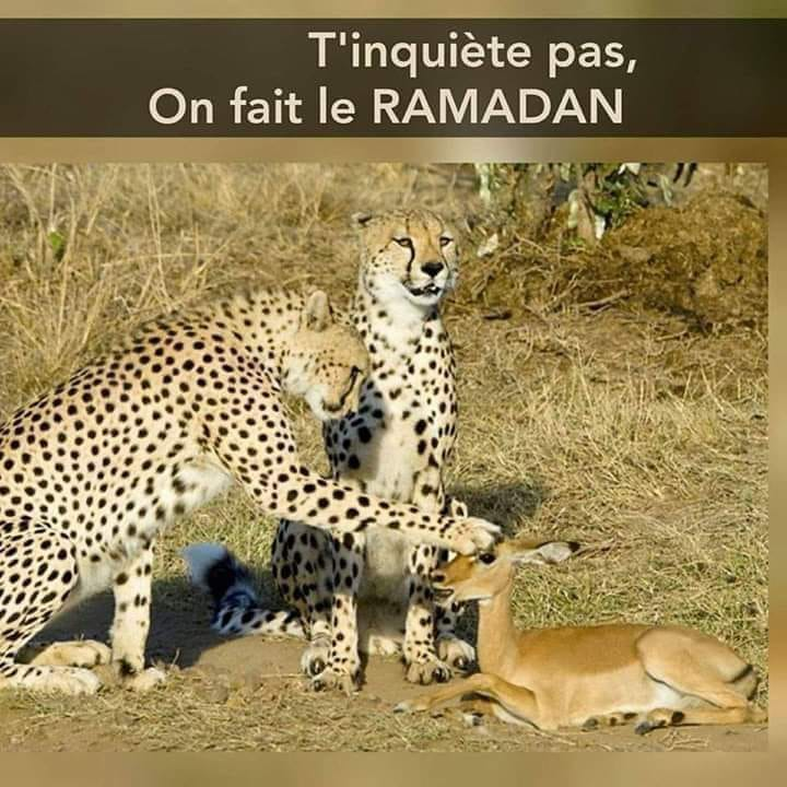 Photos Humour : ça a du bon