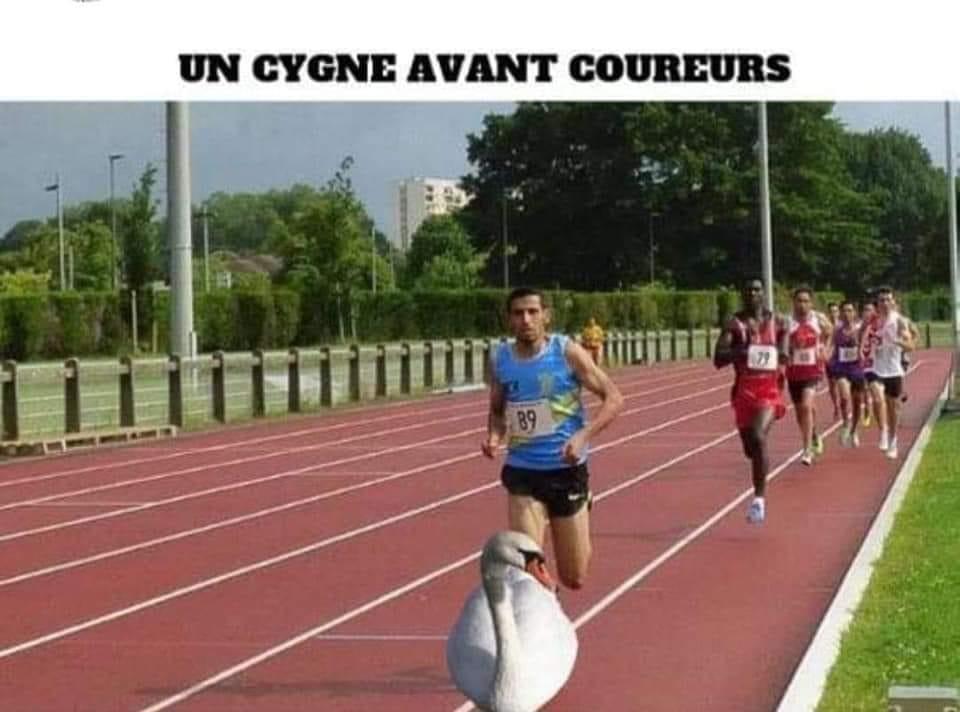 Photos Humour : cygne