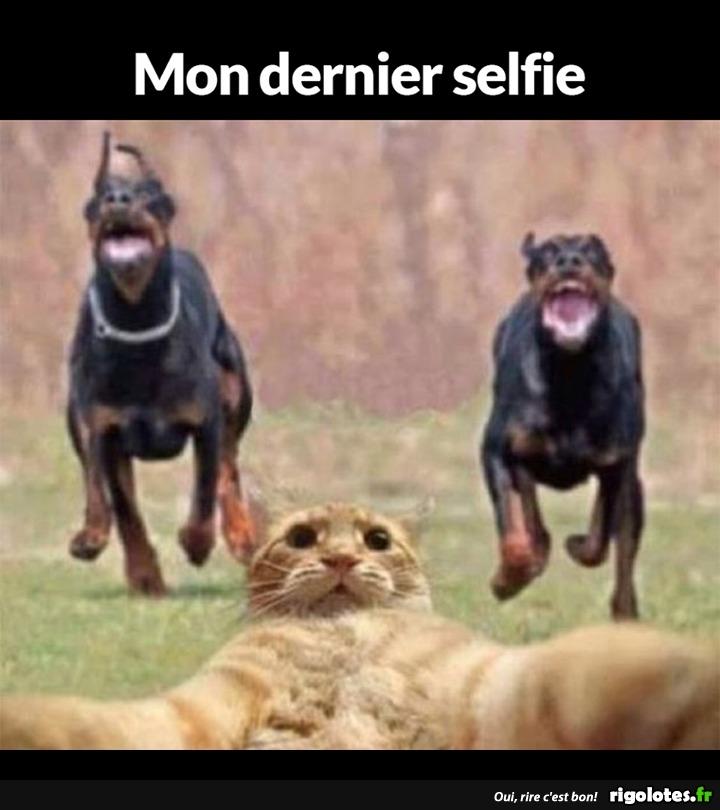 Photos Humour : dernier selfie