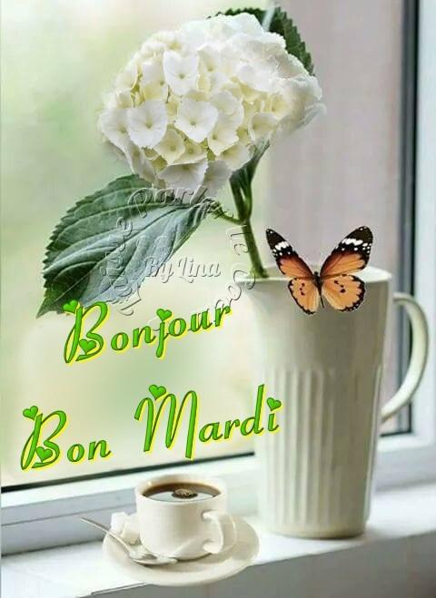 Photos Humour : Bonjour, Bon Mardi  ????????