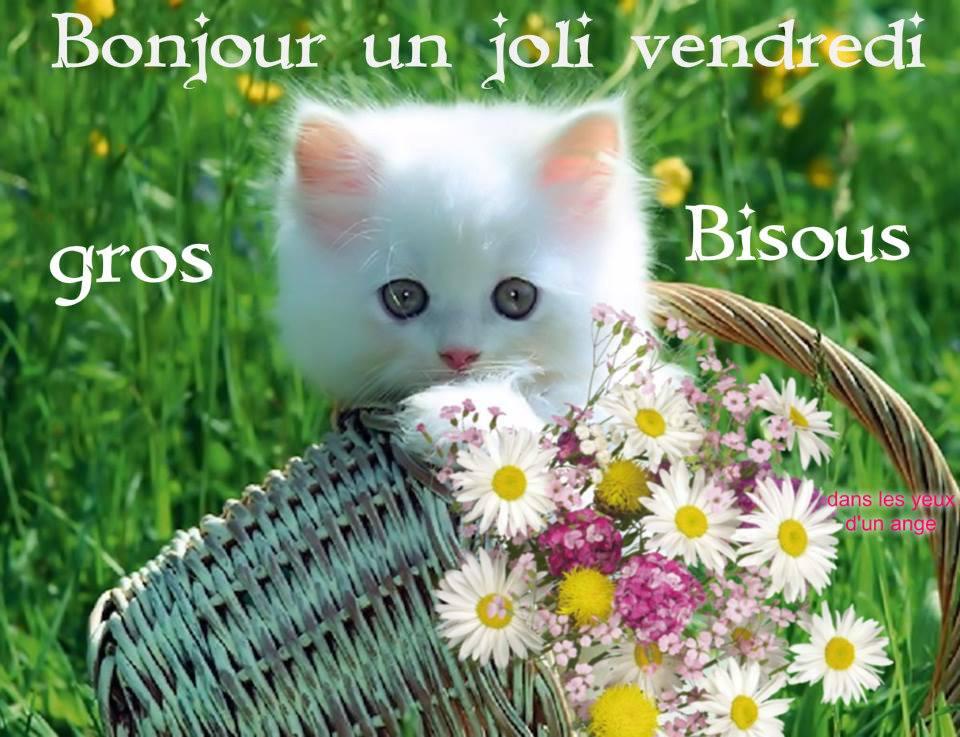 Photos Humour : Bonjour un joli vendredi - Gros bisous
