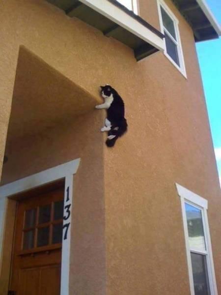 Photos Humour : jouer à chat perché