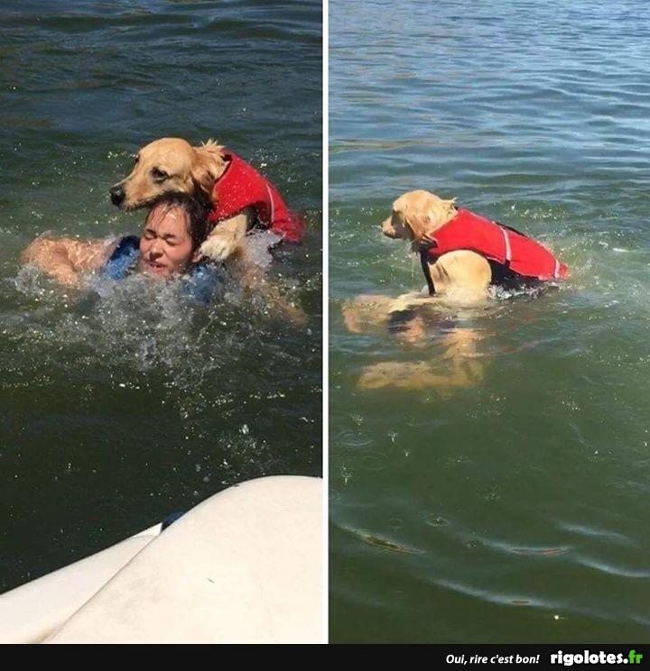 Photos Humour : y a des chiens sauveteurs