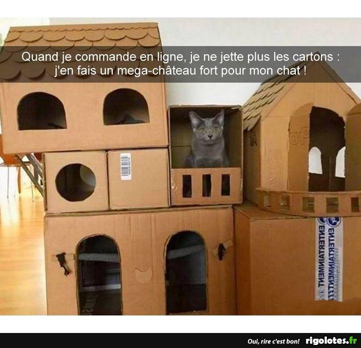 Photos Humour : château à chat
