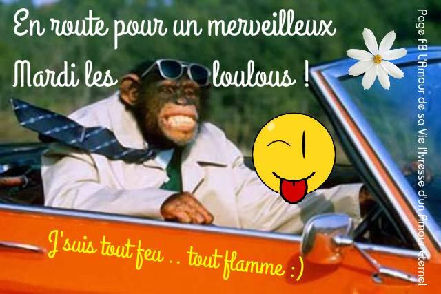 Photos Humour : En route pour un merveilleux Mardi les loulous !