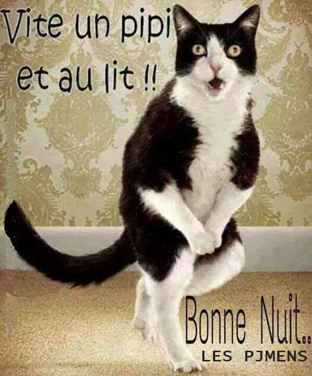 Photos Humour : BONNE NUIT