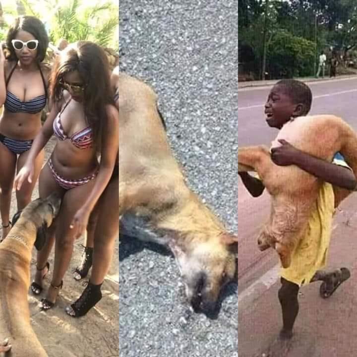 Photos Humour : pauvre chien