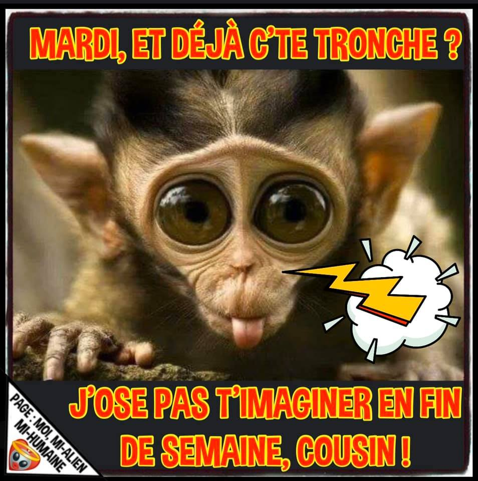 Photos Humour : bon mardi