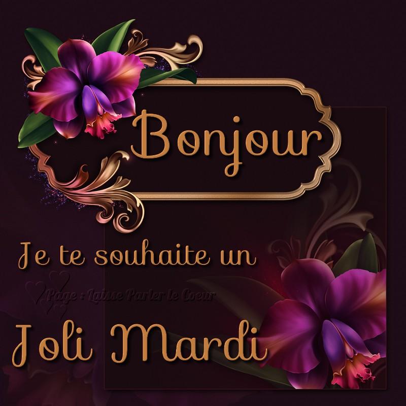 Bonjour Je Te Souhaite Un Joli Mardi Photos Humour