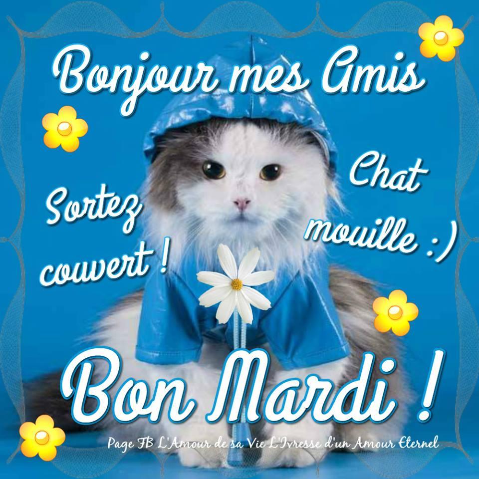Bonjour Mes Amis Sortez Couvert Chat Mouille B Photos Humour