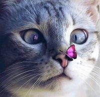 Photos Humour : chat et papillon