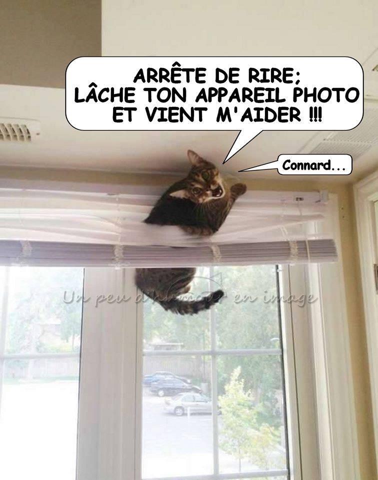 Photos Humour : coincée
