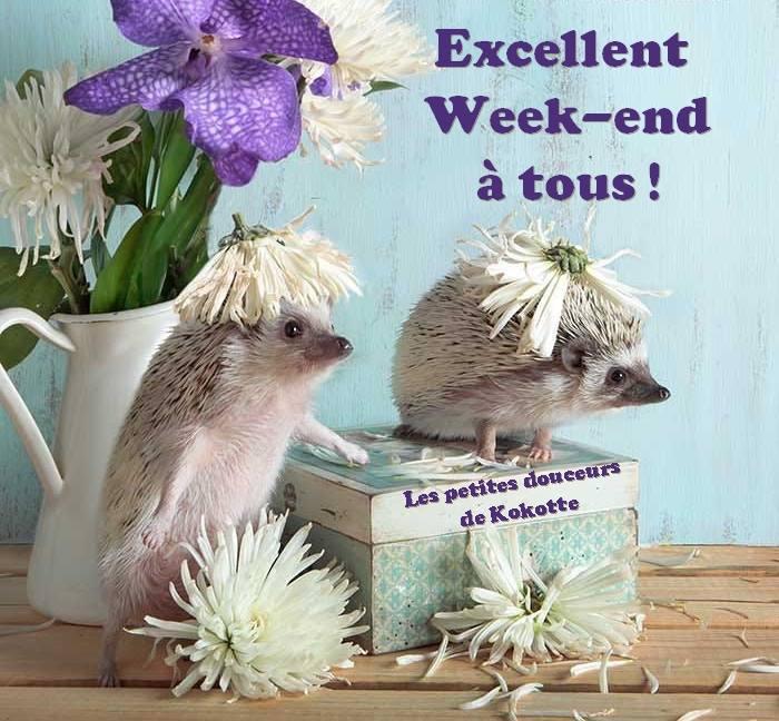 Photos Humour : Excellent Week-end à tous