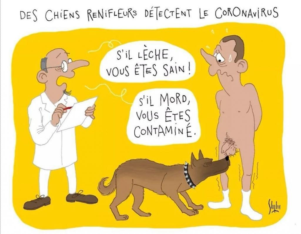 Photos Humour : Des chiens renifleurs détectent le coronavirus