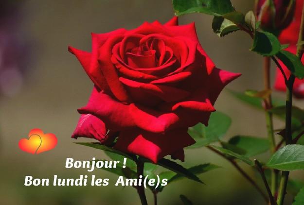 Photos Humour : Bonjour ! Bon lundi les Ami(e)s (3)