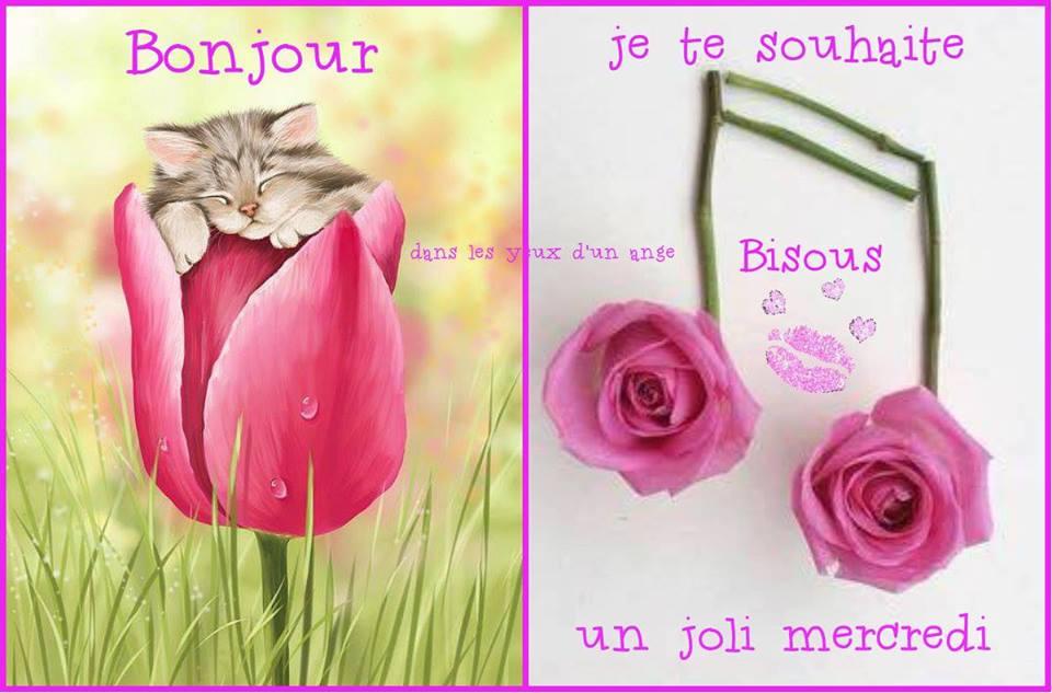 Photos Humour : Bonjour je vous souhaite un joli mercredi