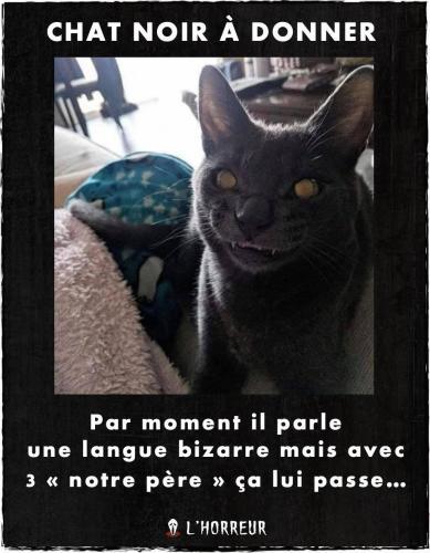 Photos Humour : Chat noir à donner