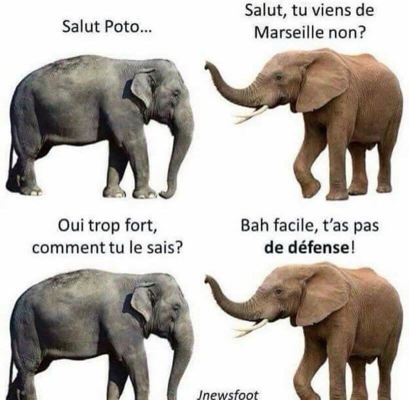 Photos Humour : pas de défense