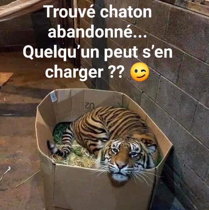 Photos Humour : Trouvé chaton abandonné - Quelqu