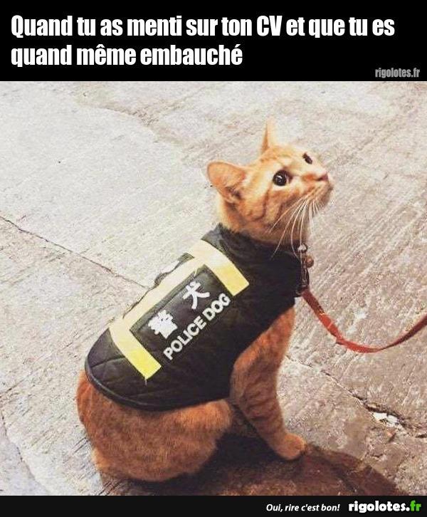 Photos Humour : chat policier