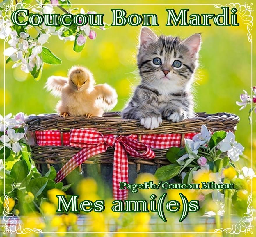 Photos Humour : Coucou, bon mardi mes ami(e)s
