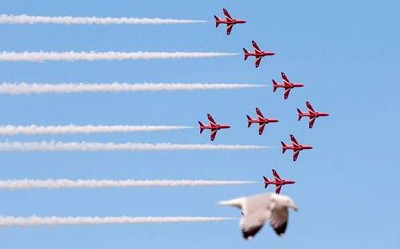 Photos Humour : patrouille aérienne