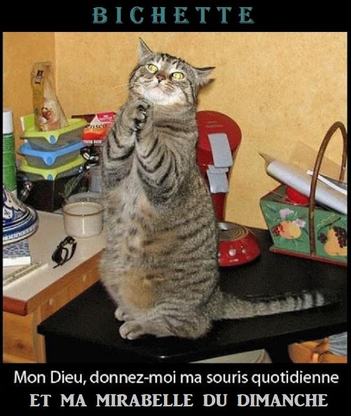 Photos Humour : Prière dominicale !