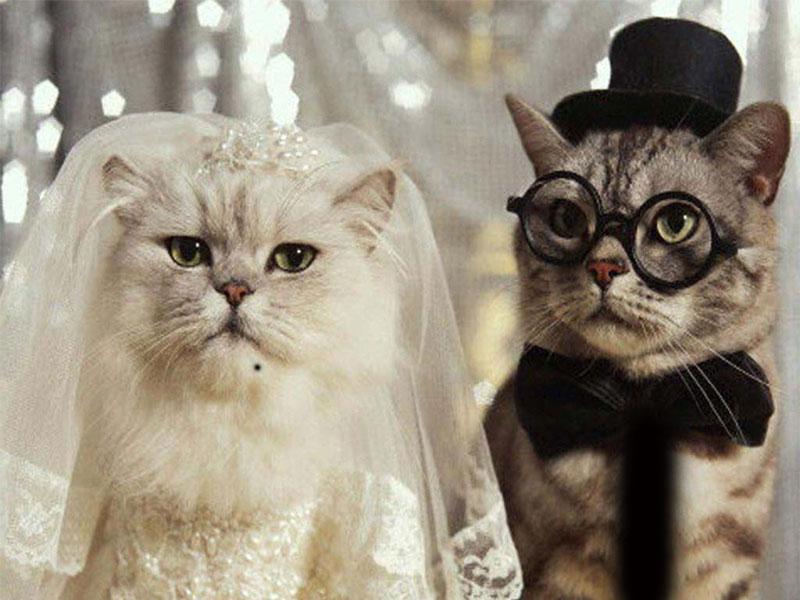 Photos Humour : mariage bichette