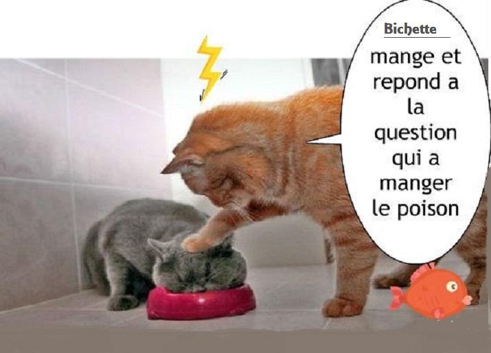 Photos Humour : PAS COMMODE LA BICHETTE