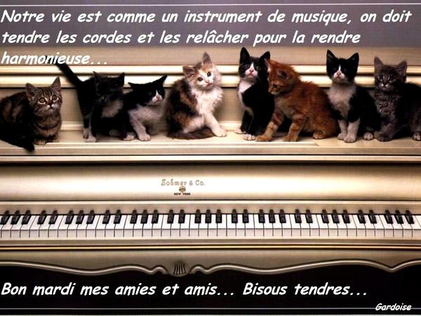 Photos Humour : Notre vie est comme un instrument de musique, on d