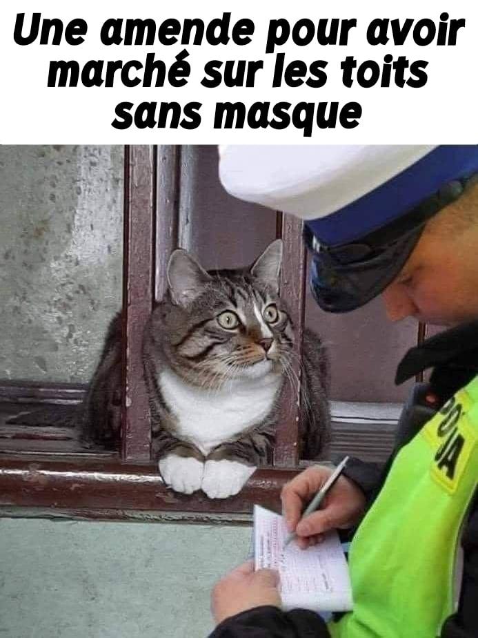 Photos Humour : m
