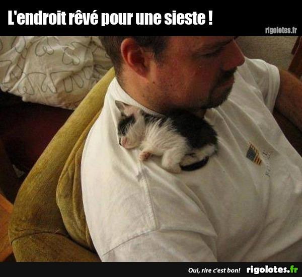 Photos Humour : sieste