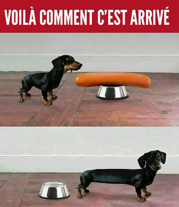Photos Humour : Voila comment c