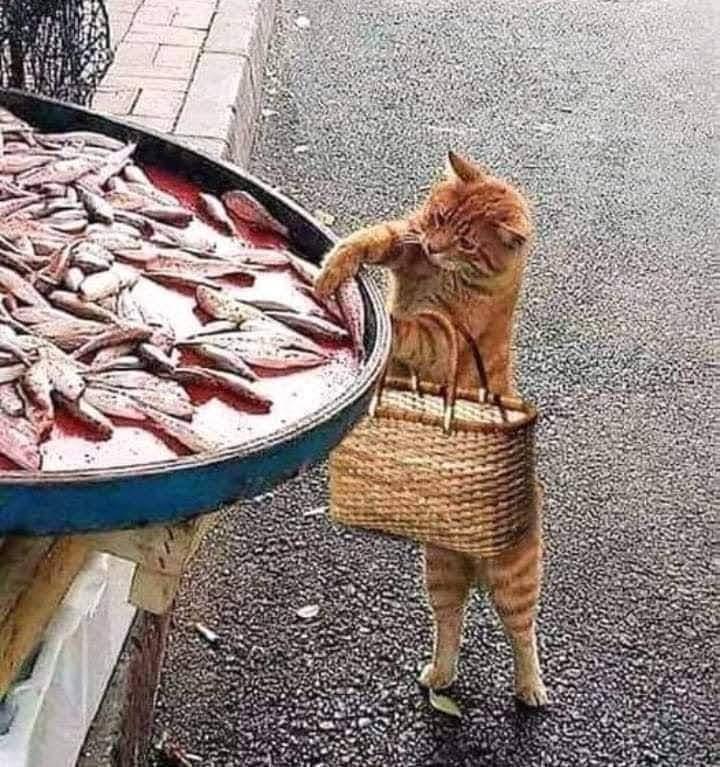 Photos Humour : bichette
